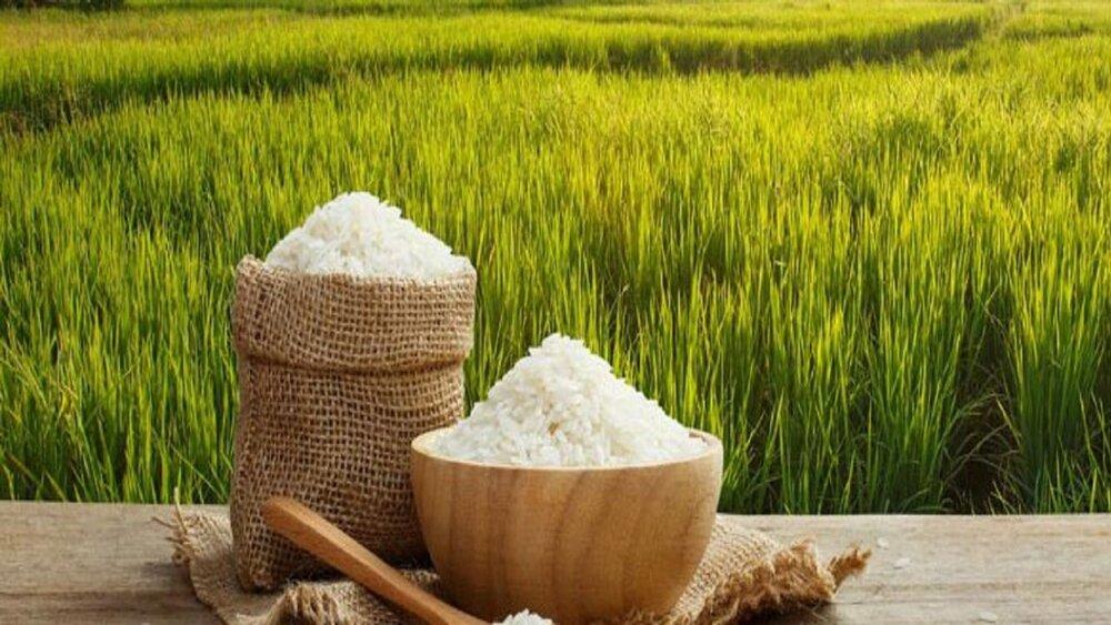 برنج و شالیزار