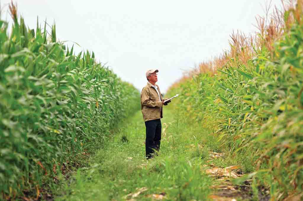 مزرعه محصولات کشاورزی