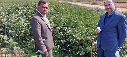 مهندس فاروقی نماینده بکوجا در استان گلستان -کشاورز نمونه پنبه و سویا