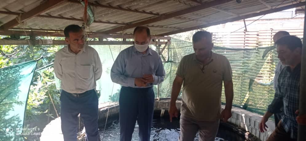 بازدید مسئولین بکوجا از مزرعه پرورش ماهی