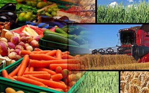رونق تولیدات کشاورزی