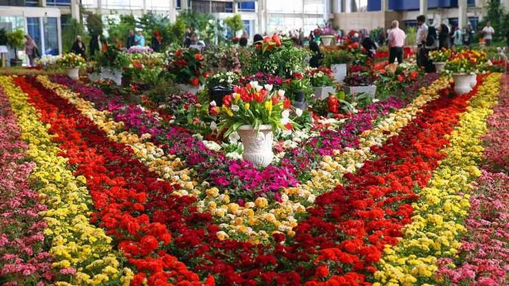 گل و گیاه صادراتی
