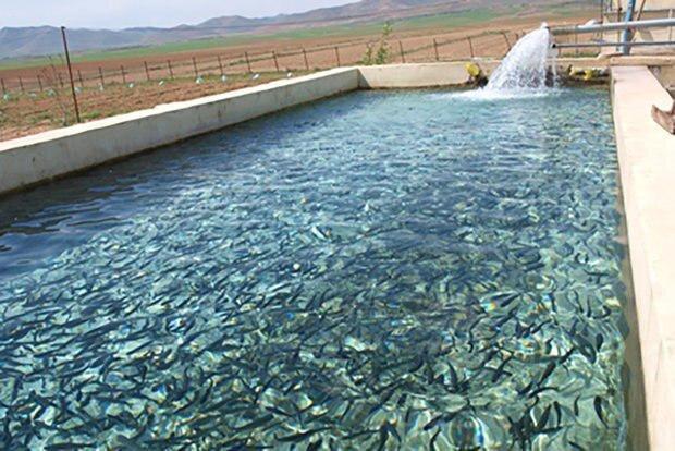 حمایت از پرورش ماهی