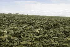 شنبه-20شهریور1400-مهندس فاروقی نماینده بکوجا در استان گلستان -کشاورز نمونه پنبه و سویا.