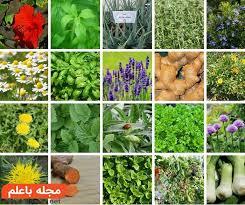 بکوجا- گیاهان دارویی